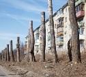 Деревья городские - дивные создания