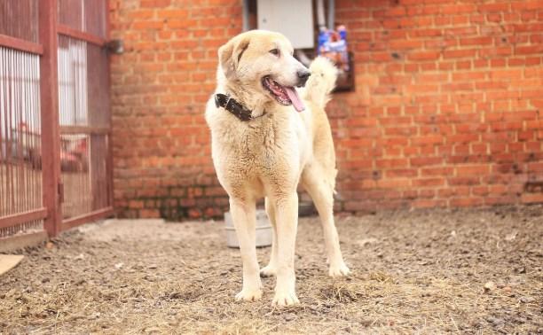 Добрый пес Вилли ждет своего хозяина