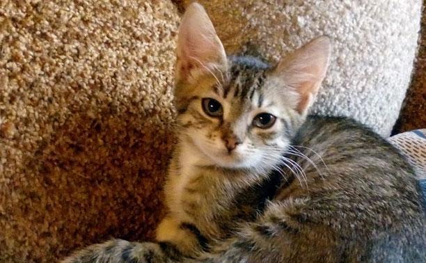 Котята и молодые кошки ищут дом