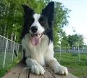 Стерилизация собак: мифы и реальность