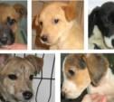Пять щенков ищут любимого хозяина