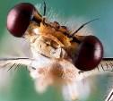 Лучшие кадры макросъемки найдены: конкурс «Мир под микроскопом» завершен