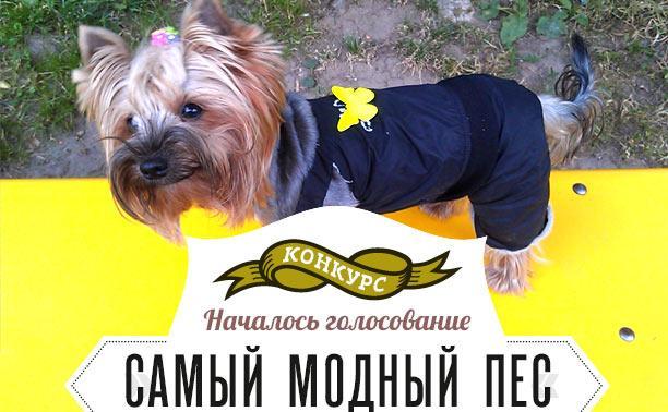 Выбираем самого модного пса