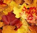 Как сохранить осенние листья?