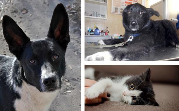 Две юные собаки и котёнок ищут дом