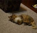 Котейке нужны хозяева