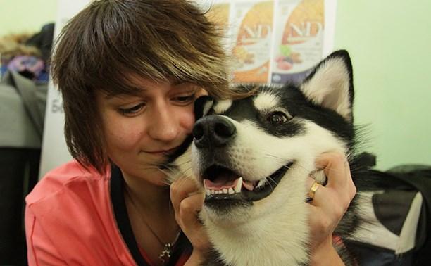 Тула приняла Всероссийскую выставку собак