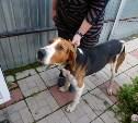 В районе Барсуков найден охотничий пёс