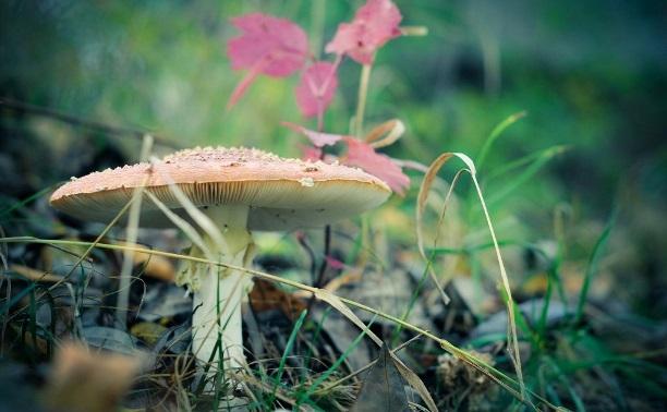 Голосуем в фотоконкурсе «За грибами»