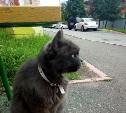 Зеленоглазой красивой кошке нужен дом
