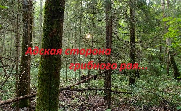 Адская сторона грибного рая