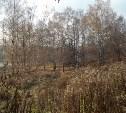По высадке хвойных в Рогожинском парке