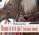 Я люблю свою лошадку!