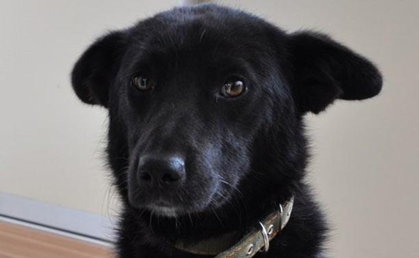 Шесть щенков и молодой красавец-пёс нуждаются в домашнем тепле