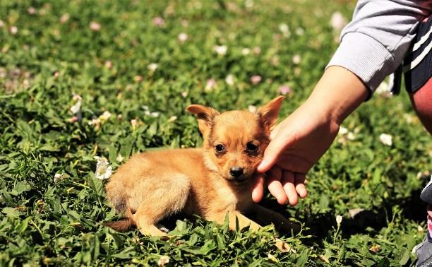 Крошки-щенки из приюта ищут добрые руки