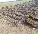 Под Тулой обнаружены останки 38 бойцов РККА
