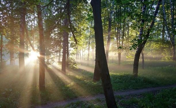 Покушения на «Рогожинский парк» продолжаются!
