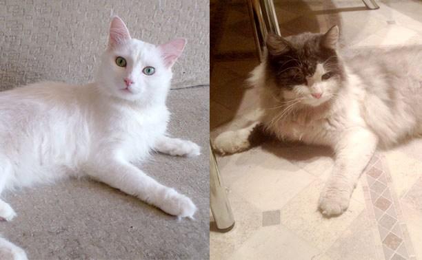 Два кота ищут хозяев