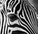 «Четко по линии»: новый фотоконкурс Myslo