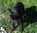 На Косой Горе пропала собака