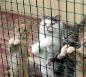 Народ, хорошим людям нужна помощь в поиске помещения для размещения животных!