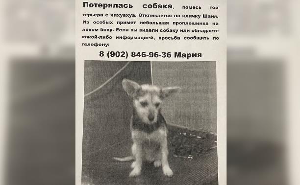 В Туле недалеко от Скуратово пропала собака
