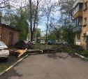 Упавшее в центре Тулы дерево перегородило выезд из двора