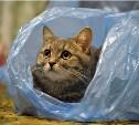 Выбираем лучших котов в мешке