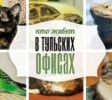 Черепахи, агамы и коты: кто живёт в тульских офисах