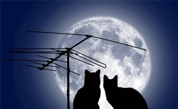 Кошка-летун II или Сказ о том, как кошку спасали