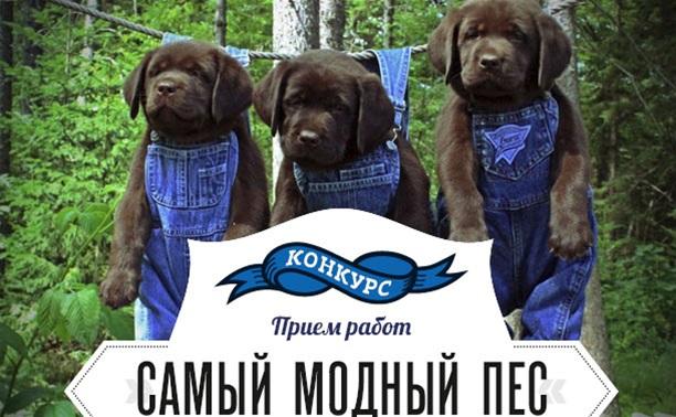Самый модный пес: Стартовал прием фотографий!