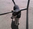 Собака укусила ребенка на территории тульской школы