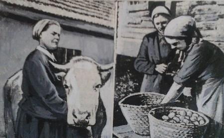 21 августа: Коровы возвращаются в Тулу
