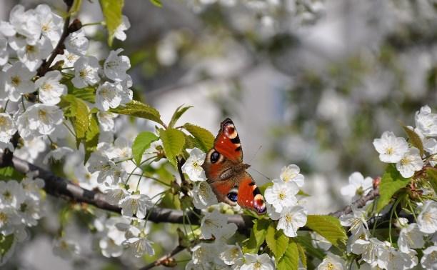 Участвуйте в фотоконкурсе цветов