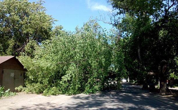 Из-за сильного ветра в Туле на дорогу рухнуло дерево