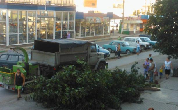 В Туле спиливают деревья!
