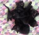 Чёрные котята – к счастью