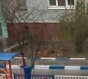 Собаки катаются с горки на детской площадке