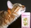 Исследователи выявили 4 кошачьих эйфоретика