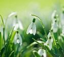 Новая весна! Вдох!