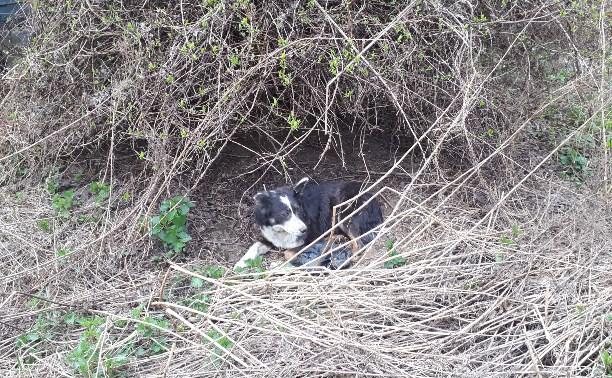 Помогите спасти собачье семейство!