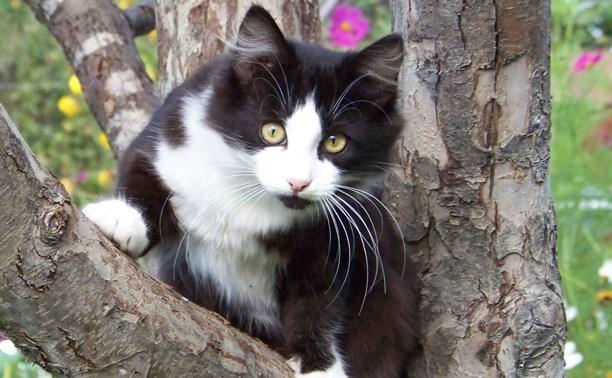 Кошке-подростку очень нужен дом