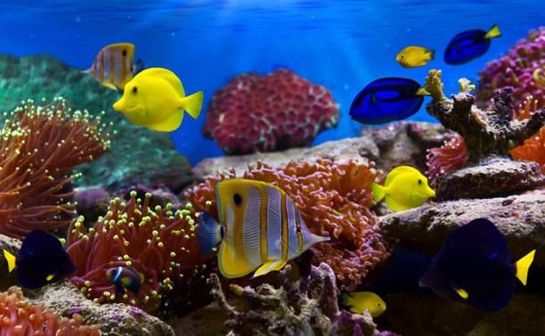 Участвуйте в фотоконкурсе аквариумных обитателей