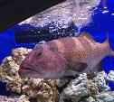 Голосуем за аквариумный мир