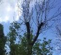 Аварийные деревья или Долгая борьба с властями