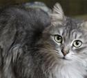 14 кошек из центра «Любимец» ищут хозяев