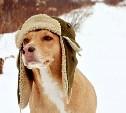 Берегите здоровье питомца зимой
