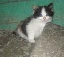 Две маленькие кошечки ищут дом