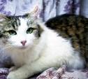 Кошечка Тори ищет свое счастье