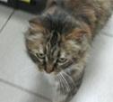 Кошкам срочно нужен дом